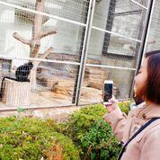 日曜朝教室(12月9日)🐘 天王寺動物園 🐧_e0175020_22341488.jpg