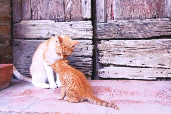 世界ネコ歩き イタリア トスカーナ_a0198826_20593002.jpg
