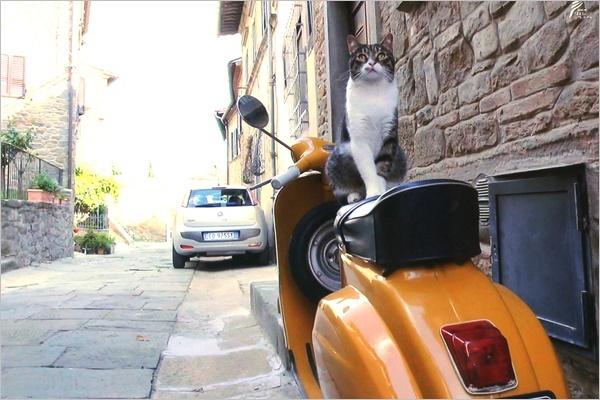 世界ネコ歩き イタリア トスカーナ_a0198826_20593387.jpg