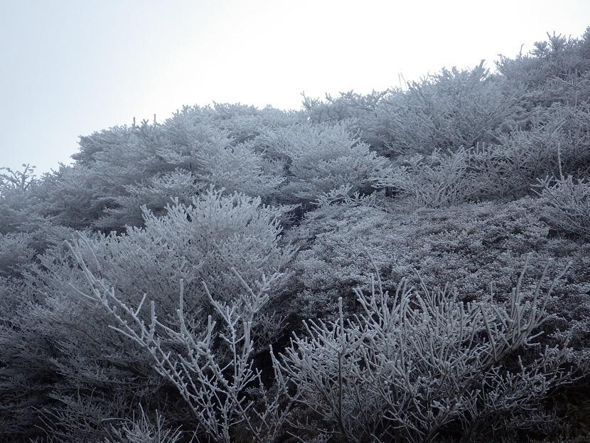 霧氷鑑賞・・久住山へ。_e0164643_11212706.jpg