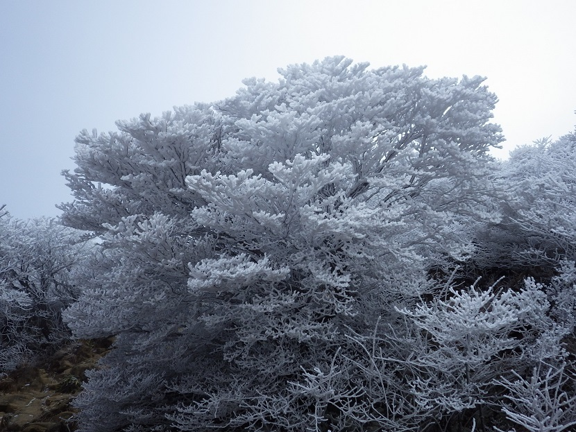 霧氷鑑賞・・久住山へ。_e0164643_11213393.jpg