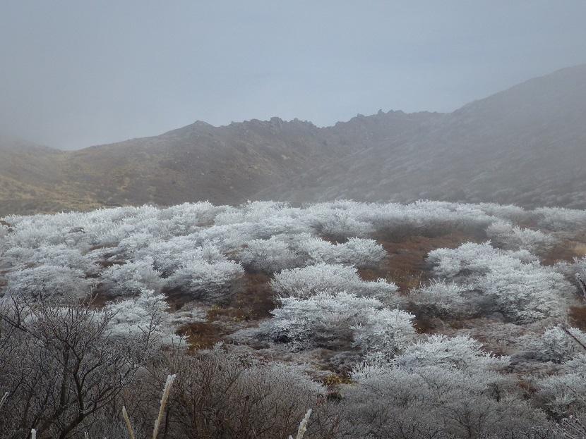 霧氷鑑賞・・久住山へ。_e0164643_11214035.jpg