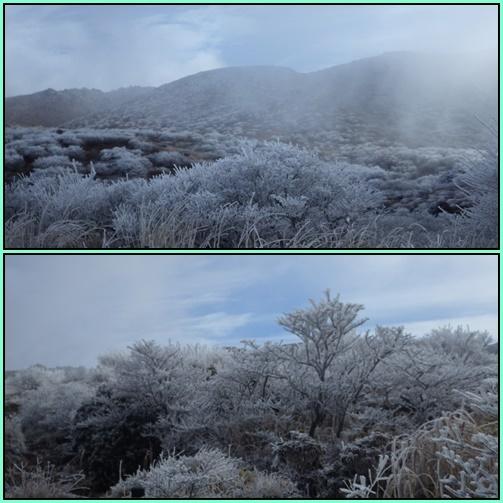 霧氷鑑賞・・久住山へ。_e0164643_11222093.jpg
