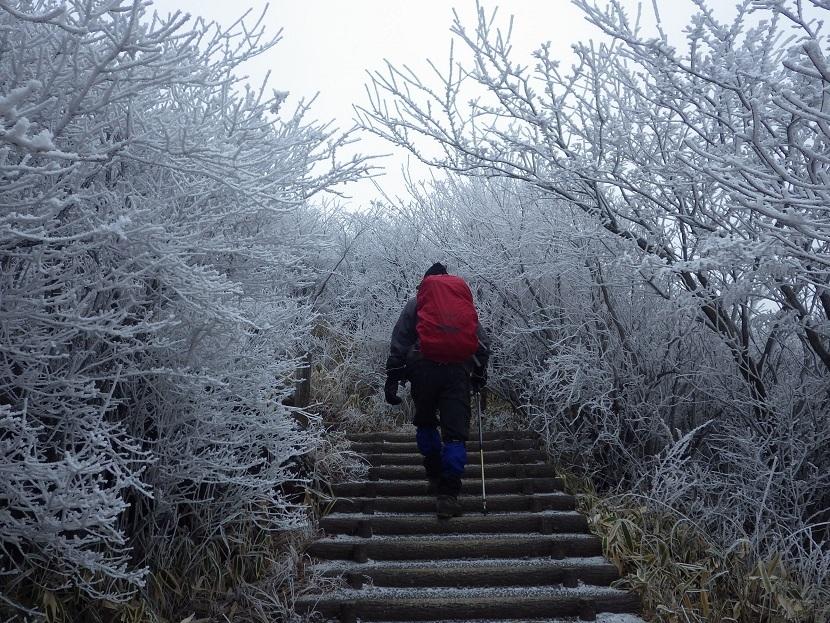 霧氷鑑賞・・久住山へ。_e0164643_11223798.jpg