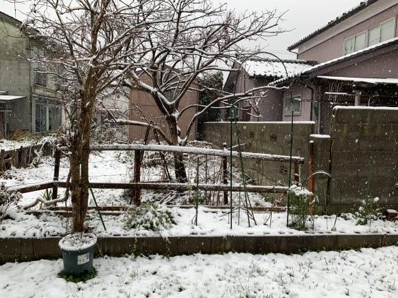 初雪_c0327752_08360354.jpeg