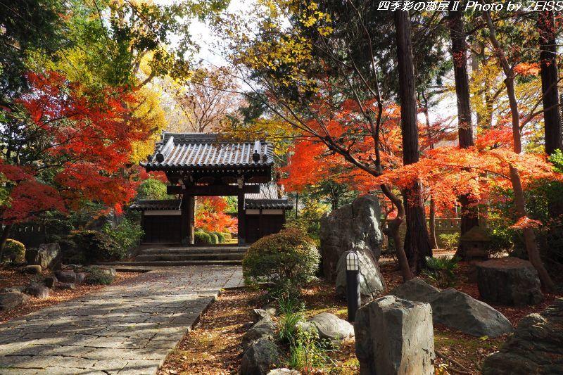 妙安寺の紅葉を愛でた後は、井の頭公園へ・・・_d0358854_12304548.jpg