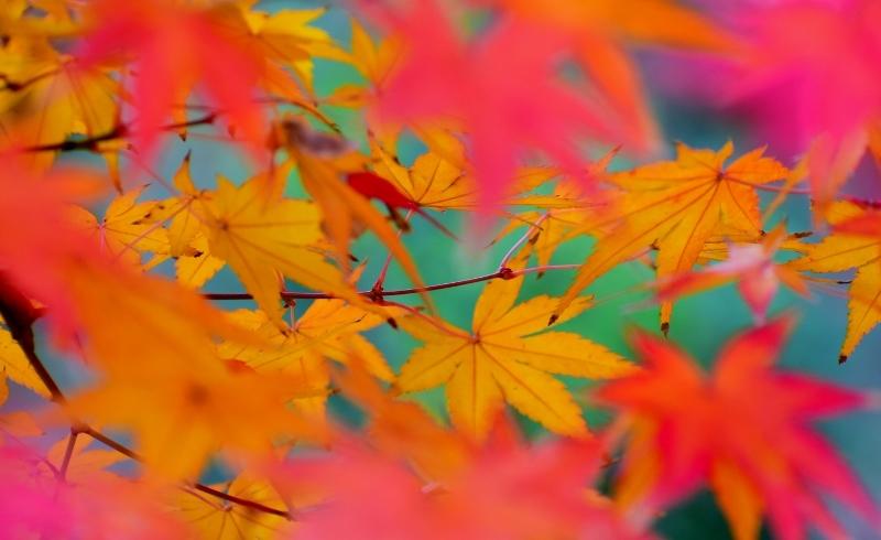 紅葉の色彩美_a0355356_17421339.jpg