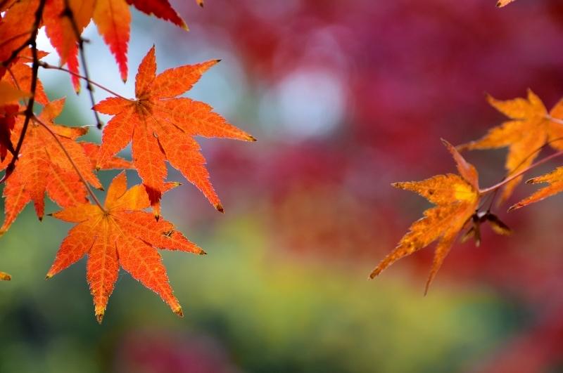 紅葉の色彩美_a0355356_17423725.jpg