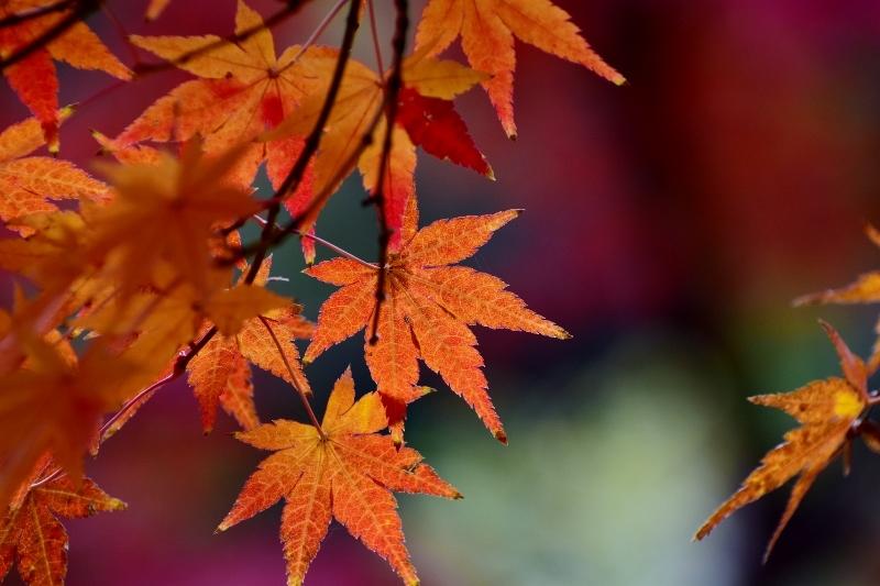 紅葉の色彩美_a0355356_17510990.jpg