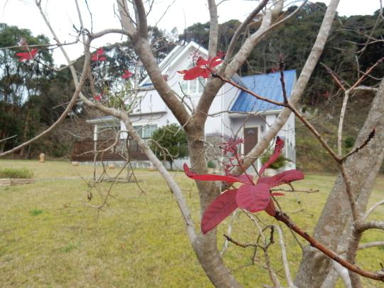 '18,12,9(日)朝散歩とポストとクリスマスツリー!_f0060461_11023416.jpg