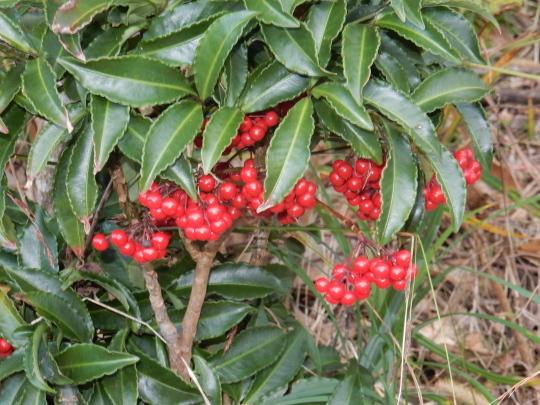 '18,12,9(日)朝散歩とポストとクリスマスツリー!_f0060461_11145251.jpg