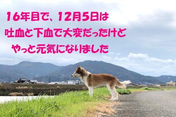 c0025171_20003139.jpg