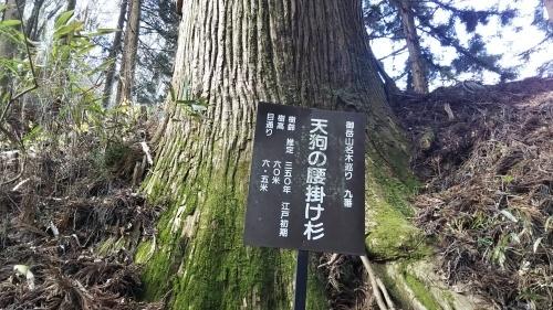 山登り④御岳山 再び_e0341099_06520743.jpg