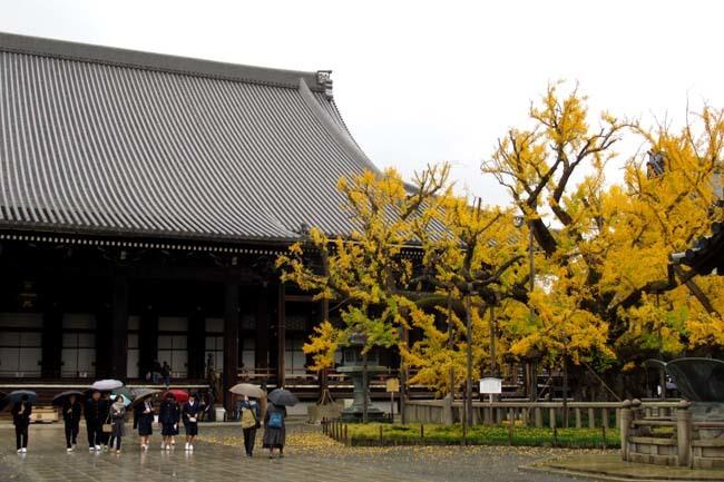 西本願寺 逆さイチョウ _e0048413_21012304.jpg