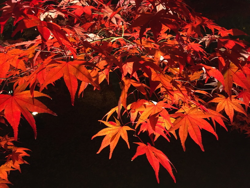 "2018年11月『京都の紅葉』 November 2018 ""The Autumn of Kyoto\""_c0219616_19495213.jpg"