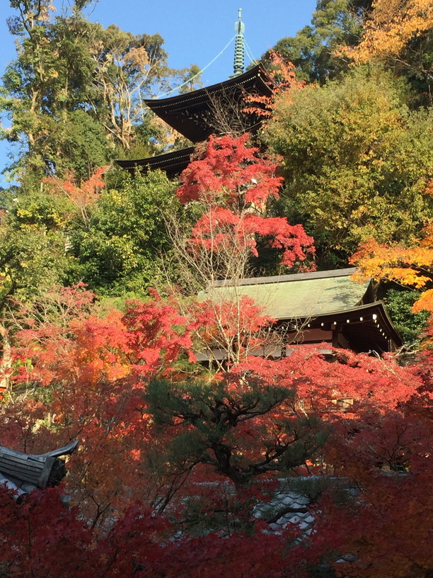 "2018年11月『京都の紅葉』 November 2018 ""The Autumn of Kyoto\""_c0219616_19495306.jpg"