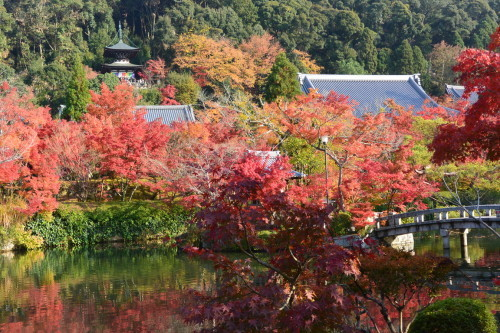 "2018年11月『京都の紅葉』 November 2018 ""The Autumn of Kyoto\""_c0219616_19495338.jpg"