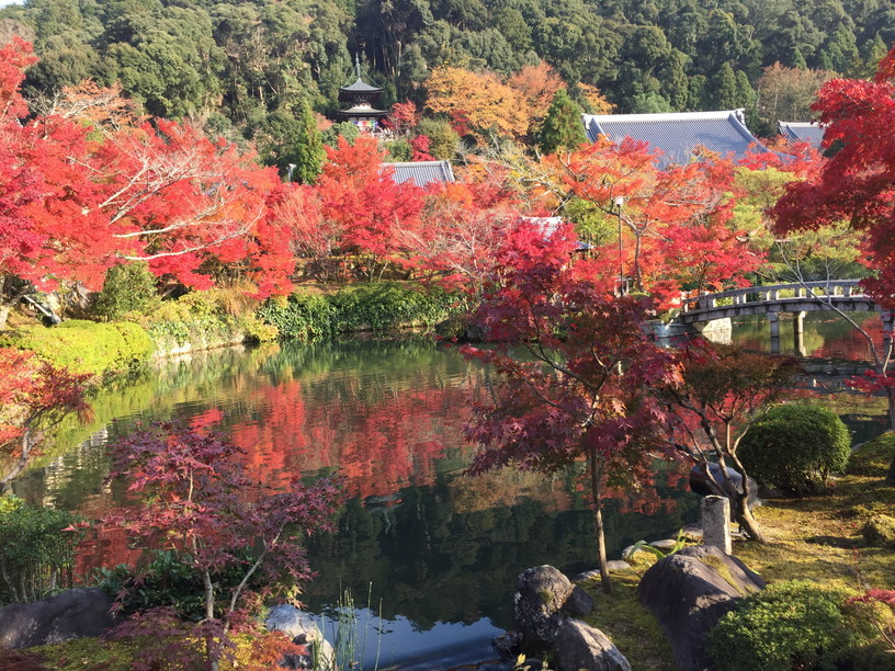 "2018年11月『京都の紅葉』 November 2018 ""The Autumn of Kyoto\""_c0219616_19513145.jpg"