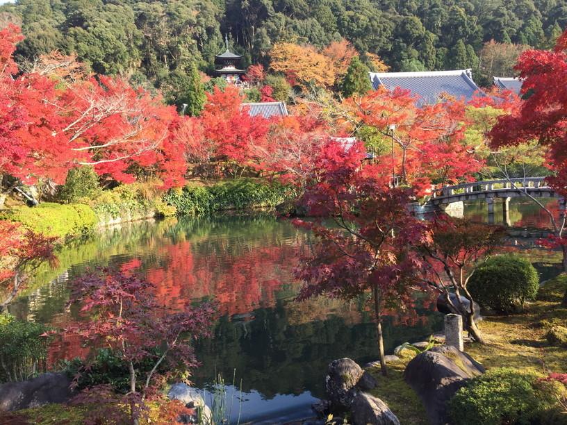 """2018年11月『京都の紅葉』 November 2018 \""""The Autumn of Kyoto\""""_c0219616_19513145.jpg"""