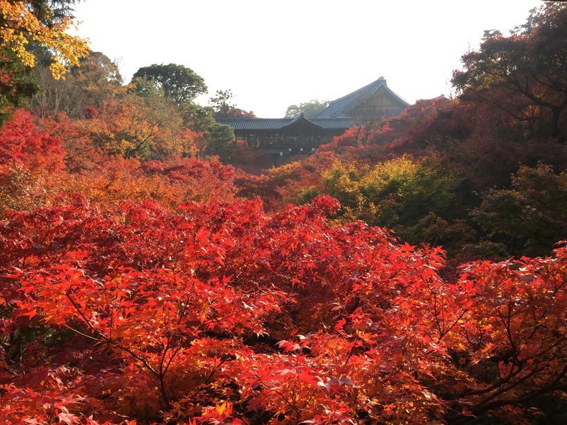 """2018年11月『京都の紅葉』 November 2018 \""""The Autumn of Kyoto\""""_c0219616_20071416.jpg"""