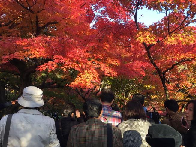 """2018年11月『京都の紅葉』 November 2018 \""""The Autumn of Kyoto\""""_c0219616_20114650.jpg"""
