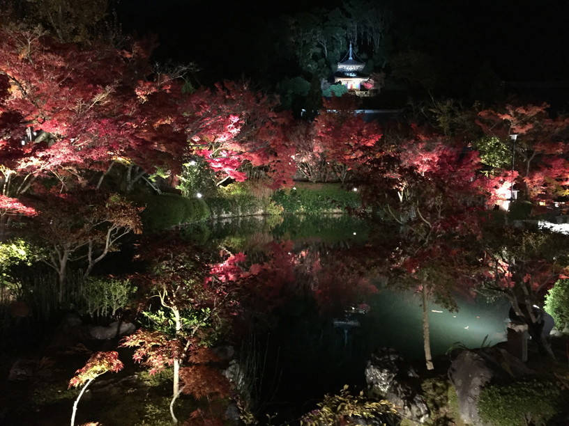 """2018年11月『京都の紅葉』 November 2018 \""""The Autumn of Kyoto\""""_c0219616_20342119.jpg"""