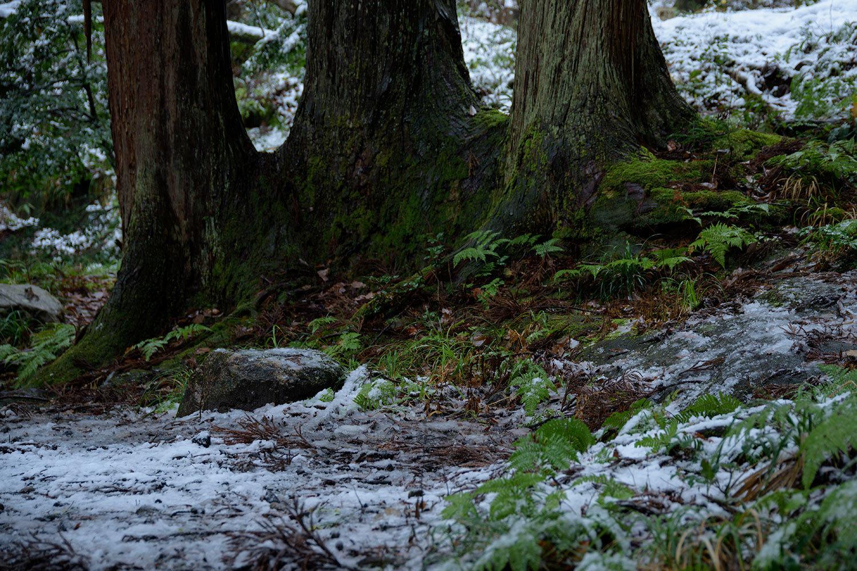first snow fall 2018_a0041722_10463023.jpg
