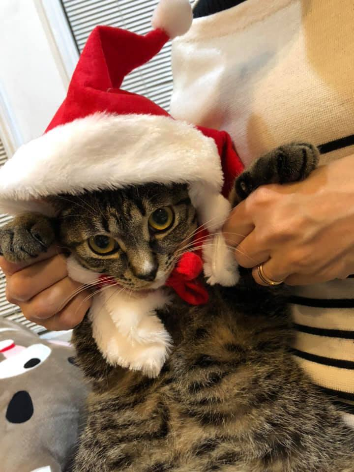 Joyeux Noël☆_b0195783_14304761.jpg