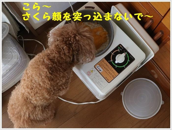 b0175688_20102327.jpg
