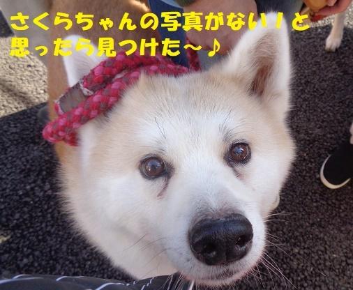 f0121712_07043525.jpg