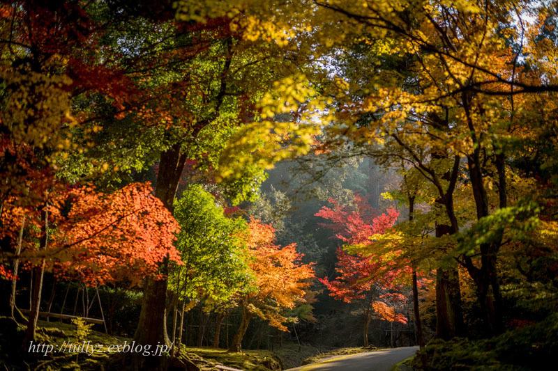 湖東三山(5)_d0108132_19285282.jpg