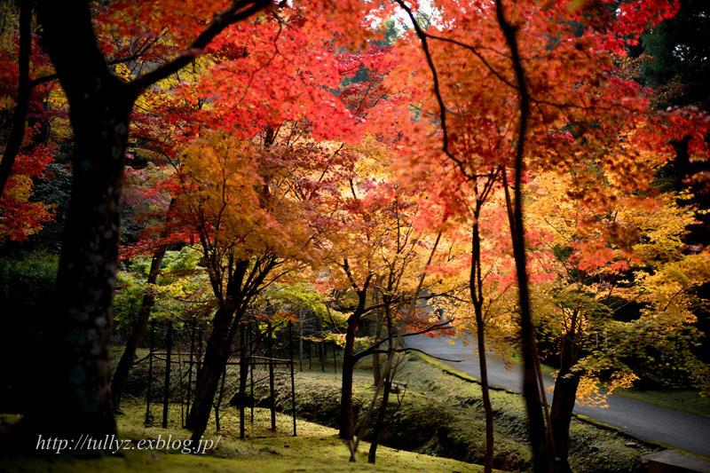 湖東三山(5)_d0108132_19285791.jpg
