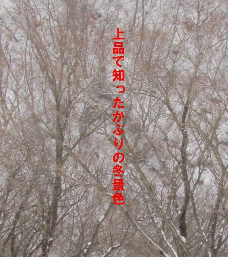 f0117041_06410567.jpg