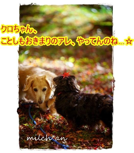b0115642_09120495.jpg