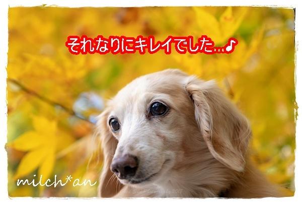 b0115642_09123555.jpg