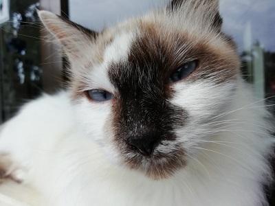 12月11日 よしまる荘の猫達_b0158746_16593375.jpg