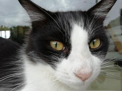 12月11日 よしまる荘の猫達_b0158746_17053465.jpg