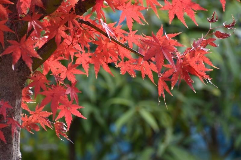 晩秋の大阪城_a0355356_22245387.jpg