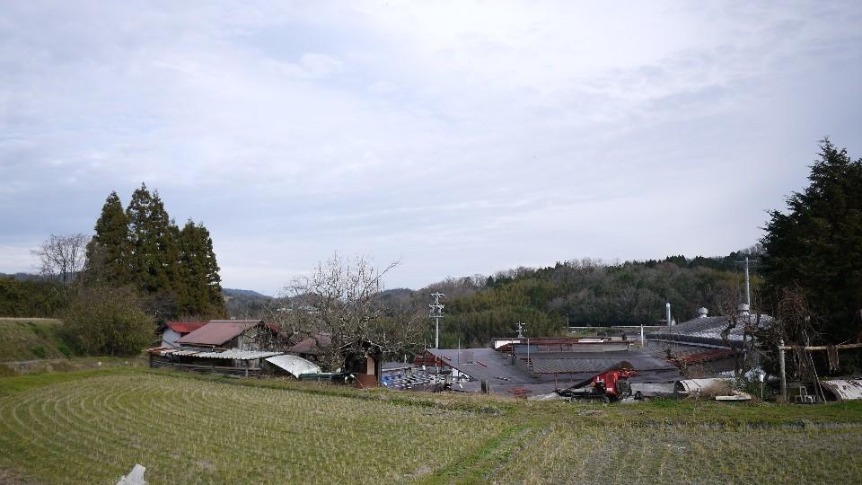 Today\'s terrace 12/11 ……………_c0220065_21023196.jpg