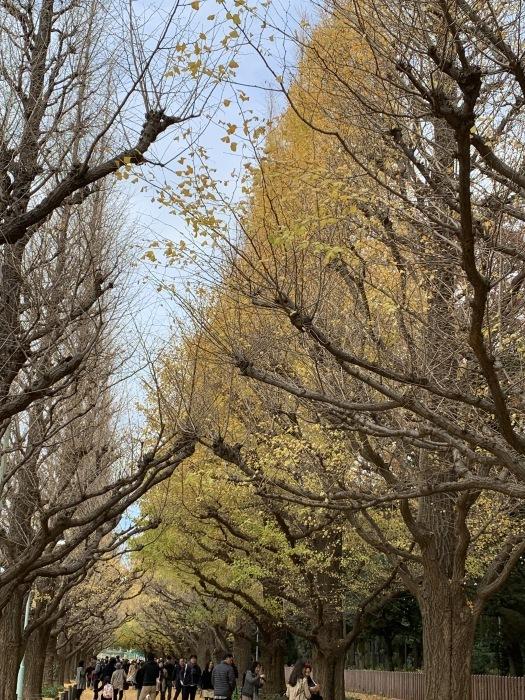 2018.12.11  晩秋〜冬 お散歩_a0083571_16362495.jpg