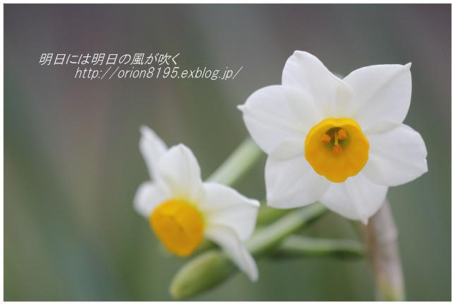 f0361079_20253898.jpg