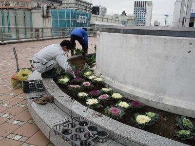 名古屋港水族館前花壇の植栽H30.12.7_d0338682_08355599.jpg