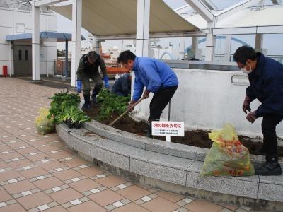 名古屋港水族館前花壇の植栽H30.12.7_d0338682_08383985.jpg