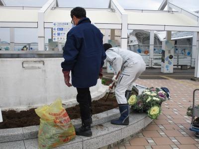 名古屋港水族館前花壇の植栽H30.12.7_d0338682_08385564.jpg