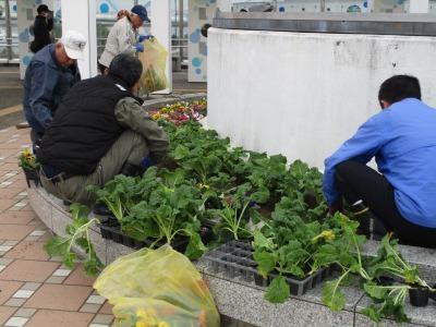 名古屋港水族館前花壇の植栽H30.12.7_d0338682_08390777.jpg