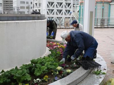 名古屋港水族館前花壇の植栽H30.12.7_d0338682_08391981.jpg