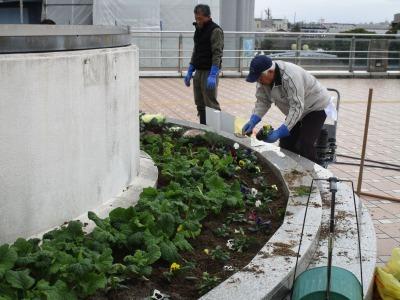 名古屋港水族館前花壇の植栽H30.12.7_d0338682_08393735.jpg