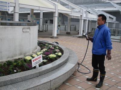 名古屋港水族館前花壇の植栽H30.12.7_d0338682_08400723.jpg