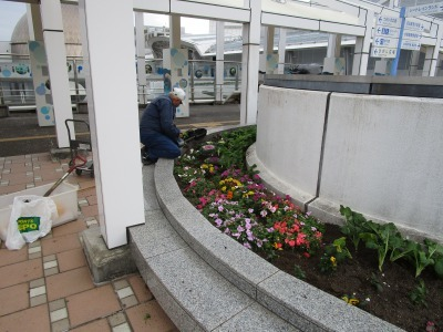 名古屋港水族館前花壇の植栽H30.12.7_d0338682_08405155.jpg