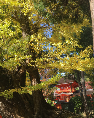 久しぶりの旅行 奈良編_f0220089_17555205.jpg